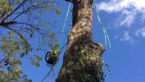 NKY Tree Removal Photos