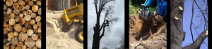 Go-Getter Services from NKY's premier and most affordable Tree Service Experts